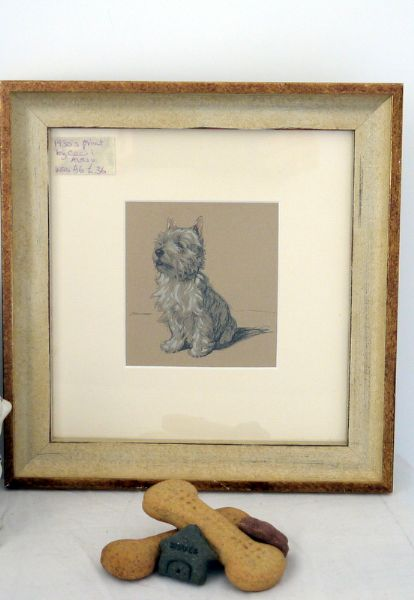 Westie with pink ears!  sitting  1930's print by Cecil Aldin